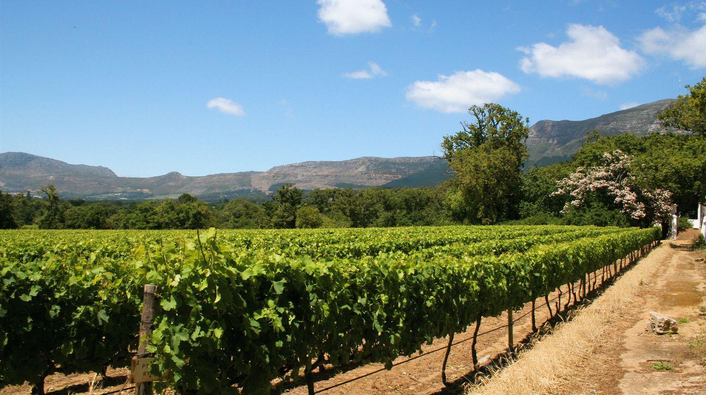 Südafrikas neue Weine: Die Revolution der Kellermeister