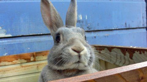 Galten dem Kaninchen des Angeklagten dessen wüste Beschimpfungen oder muss das Haustier nur als Alibi herhalten?