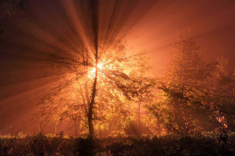 Spendet auch im tiefsten Winter neue Energie, die Sonne.