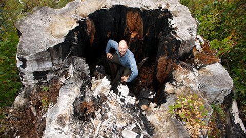 """""""Naturwunder Erde"""": Regenwald in Tasmanien: Jahrhunderte gewachsen, in Sekunden zerstört"""