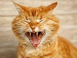Katzen protestieren meist durch Unsauberkeit oder Markierverhalten im Haus