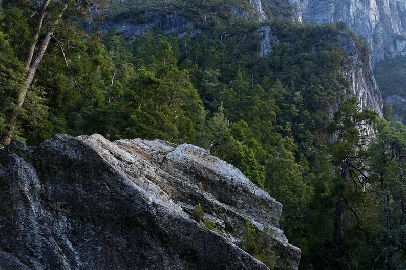 """Hoch ragen die Bäume über die schroffen Felsen hinaus. Noch weiter oben weicht der Wald und die Vegetation wird alpin. Bodendecker und Sträucher dominieren auf einer Höhe von mehr als 2500 Metern im Franklin Gordon Wild Rivers Nationalpark, der im Westen des australischen Bundesstaates Tasmanien gelegen ist.  Für das Greenpeace-Fotoprojekt """"Naturwunder Erde"""" hat der Fotograf Markus Mauthe vier Wochen lang Tasmanien bereist und unter anderem die Urwälder dort erkundet. Neben den höchsten Laubbäumen der Welt - den Riesen-Eukalypten - sind in Tasmanien auch uralte Baumarten beheimatet, die nur noch auf der Australien vorgelagerten Insel vorkommen: etwa die Huon-Pine, die mehr als 3000 Jahre alt werden kann. Oder die Celery-top-Pine, die extrem langsam wächst und ein Alter von 800 Jahren erreichen kann.  Sie alle sind stumme Zeugen einer weit zurückliegenden Vergangenheit, in der Australien, Südamerika, Afrika, Antarktika, Madagaskar und Indien einst den riesigen südlichen Urkontinent Gondwana bildeten. Die Baumarten, die heute in Tasmanien zu besichtigen sind, bedeckten bereits diesen Urkontinent, der vor etwa 100 Millionen Jahren auseinanderbrach."""