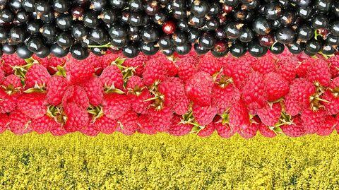 Schwarz-Rot-Gold hier mit schwarzen Johannisbeeren, Himbeeren und einem Rapsfeld.