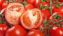 Das Erbgut von Tomaten ist entschlüsselt. Nun lassen sich aromatische Tomaten züchten.