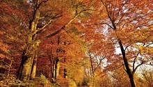 """Welt-Wald-Gebühr      Wer hat's erfunden? Logisch: die Deutschen. Weshalb sonst ist überall vom """"deutschen Wald"""" die Rede? Ein derart wichtiger Teil des Ökosystems, der Sauerstoff, Schatten und Picknick-Flächen bereitstellt, kann nicht kostenlos verschenkt werden. Zumindest für romantisierende Baumsorten wie Eiche und Tanne ist künftig eine Welt-Wald-Gebühr von 1 Euro pro Exemplar fällig. Größere Einnahmen sind aus Kanada zu erwarten, das sich bislang gar nicht um die deutsche Wohlfahrt gekümmert hat."""