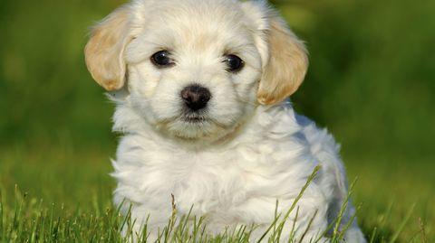 Der Hund liegt bei den Suchanfragen des sonst katzenvernarrten Internets an erster Stelle