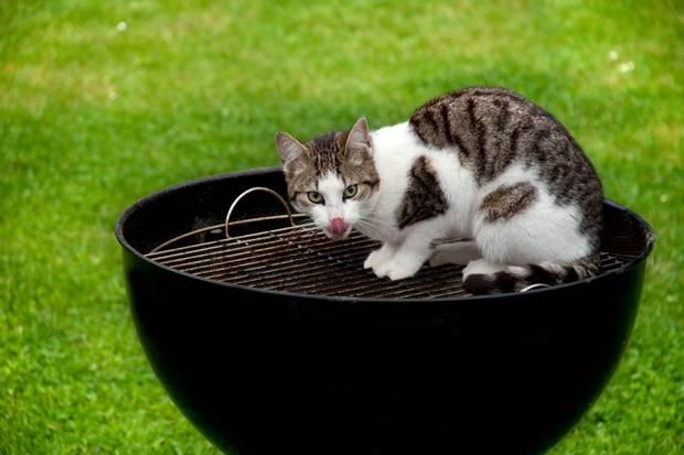Klar, sind Katzen niedlich. Aber sind das Lämmchen, Kälbchen und Schweinchen nicht auch?