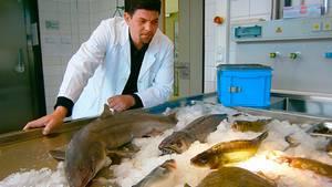 Promi-Koch Tim Mälzer untersucht kritisch die Fisch-Industrie