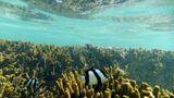 Schon dicht unter der Wasseroberfläche beginnt eine andere Welt, begegnen einem Vierbinden-Preußenfische. Der verästelte Kosmos der Korallenstöcke ist Lebensraum für 1500 Fischarten und 5000 verschiedene Arten von Weichtieren. Und im Wasser versteht man sofort, warum die Nationalfarbe des Bundesstaates Queensland türkis ist.