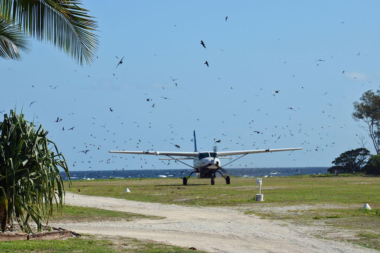 Die kleine Propellermaschine scheint kurz vor dem Aufsetzen durch eine Wand von Vögeln zu fliegen. Hunderte von Seeschwalben kreisen über der Piste. Es scheint, als wollten sie die unliebsame Konkurrenz aus der Luft von der Landung abhalten.