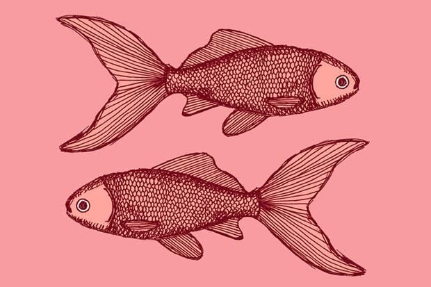 Auf Fische wartet 2015 ein wilder Mix in der Liebe