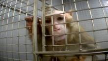 Im September 2014 zeigtestern TV Bilder aus den Versuchslaboren des Max-Planck-Instituts in Tübingen, die ein Tierschützer mit versteckter Kamera aufgenommen hatte.