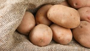 Die Kartoffel: Für Menschen im 19. Jahrhundert war sie in strengen Wintern eine Lebensvesicherung.