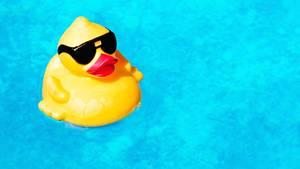 Beim Schwimmen die Gedanken ordnen: Unserem Autoren gelingt das - erst recht, wenn unerwarteter Besuch auftaucht.