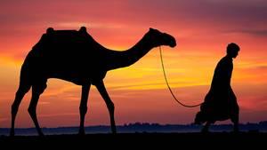 Abraham mit Kamel? Eher nicht, denn zu Zeiten des jüdischen Vorvaters gab es im heutigen Israel noch gar keine zahmen Höckertiere.