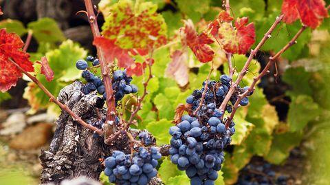 stern-Weinschule Bordeaux: Herausragende Rot- und Weißweine aus dem Pessac-Léognan