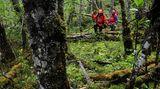 An Land stellte sich den Bergsteigern das erste Hindernisse entgegen: Weil an dieser Stelle Feuerlands zehn Mal mehr Niederschlag fällt als in Deutschland, herrscht dort ein ganz andere Vegetation. Zunächst mussten die Drei einen Weg durch den üppig wuchernden Regenwald finden