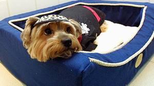 Die Anhänglichkeit seines Hundes überführte einen per Haftbefehl gesuchten Mann