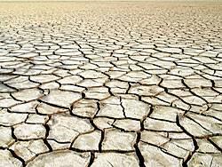 Durch den Klimawandel verlieren die Böden an Fruchtbarkeit