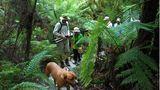 Die Geheimnisse des Urwaldes erklärt Shayne seinen Gästen auf abendlichen und nächtlichen Safaris. Sein Hund Womby und ein Fernglas gehören bei einer solchen Pirsch durch mannshohen Farn dazu.