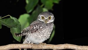 Jäger der Nacht: Uhus werden erst aktiv, wenn andere schon schlafen