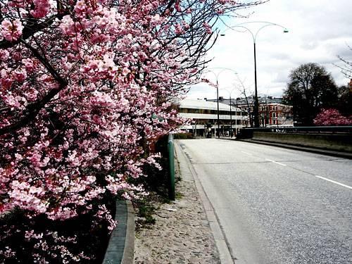 Die Pollen von Straßenbäumen reizen Allergiker besonders. Schuld sind Feinstaubpartikel, die sich an der Oberfläche absetzen