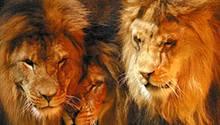 Löwen sind selbstbewusst und mutig. Typische Löwen sind Joschka Fischer, Mick Jagger und Udo Jürgens