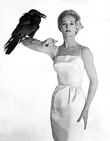 """Die amerikanische Filmschauspielerin Tippi Hedren wurde weltberühmt durch ihre Rolle in """"Die Vögel"""". Dabei hatte sie ursprünglich gar keine Schauspiel-Karriere geplant. Als Model verdiente sie gutes Geld. Im Oktober 1961 sah Alfred Hitchcock sie in einem Werbespot auf NBC und war augenblicklich angetan. Noch am selben Tag wies er seinen Agenten an, Kontakt aufzunehmen. Hitchcock hatte sich in den Kopf gesetzt, aus ihr eine Schauspielerin zu machen, und so unterschrieb sie einen exklusiven Siebenjahresvertrag. Die Gagen waren allerdings bescheiden. Im ersten Jahr bekam sie 500 Dollar pro Woche - weit weniger als sie vorher durchs Modeln verdient hatte"""