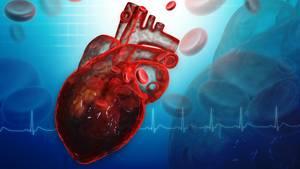 Unser wichtigster Muskel: das Herz