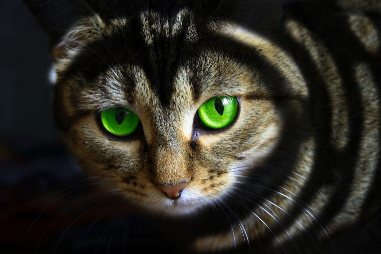 Wer eine Tierhaarallergie hat, reagiert oft nur sensibel auf eine Tierart, meistens auf Katzen