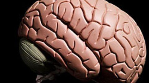 Bei Krankheiten wie Autismus oder Schizophrenie sind die Gehirne nicht nur sprichwörtlich aus dem Takt gekommen