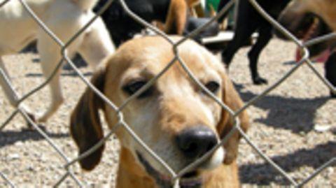 Viele Hunde zu besitzen ist legal, doch ihre Haltung muss tiergerecht sein