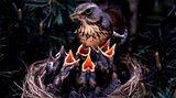 """Eine gewagte biologische Erklärung liefert Caroline aus Oldenburg: """"Das Küssen leitet sich von der Fütterung der Jungvögel ab. Die Berührung der Münder bzw. mit dem Mund zeugt noch heutzutage von der Bereitschaft sich um den Anderen kümmern zu wollen"""""""