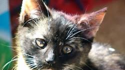 Mindestens 300 Katzen hat ein Mann aus Sakramento in seinen Gefriertruhen aufbewahrt