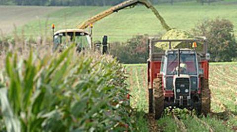 Nach der Ernte werden die pflanzlichen Reststoffe zur Stromerzeugung genutzt