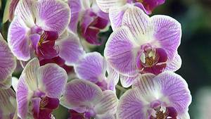 """""""In der Eifel könnten sich die Orchideen ausbreiten"""", prognostiziert der Biologe Holger Kreft"""