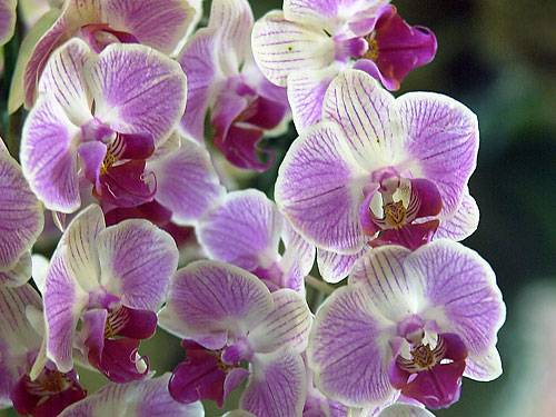 artenvielfalt klimawandel bringt orchideen in die eifel. Black Bedroom Furniture Sets. Home Design Ideas
