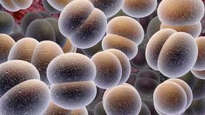 Wenn Keime sich vermehren, tauschen sie oft Gene aus. Das verändert ihr Äußeres