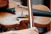 Eine Pilz-Behandlung lässt gewöhnliche Geigen besser klingen als eine Stradivari