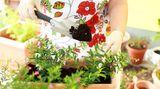 Falls Sie zu einer besonders gefährdeten Berufsgruppe gehören und zum Beispiel Imker oder Gärtner sind, sollten Sie als Insektengiftallergiker spezielle Vorkehrungen treffen. Gärtner sollten bei der Arbeit mit Blütenpflanzen stets Handschuhe tragen
