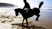 """2,7 Milliarden """"Buchstaben"""" enthält das Ergbut des Pferds"""