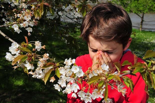Meist tritt der Heuschnupfen zwischen dem dritten und sechsten Lebensjahr auf
