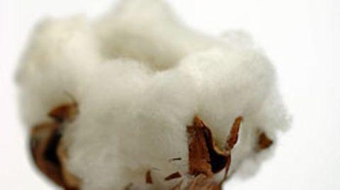 Vier Prozent der weltweiten Ackerfläche sind mit Baumwolle bepflanzt - aber elf Prozent aller Insektizide und Herbizide werden dort eingesetzt