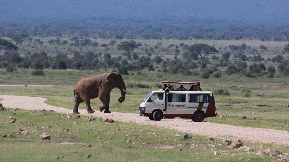 Safari-Guide Nationalparks: Krüger, Karoo & Co.