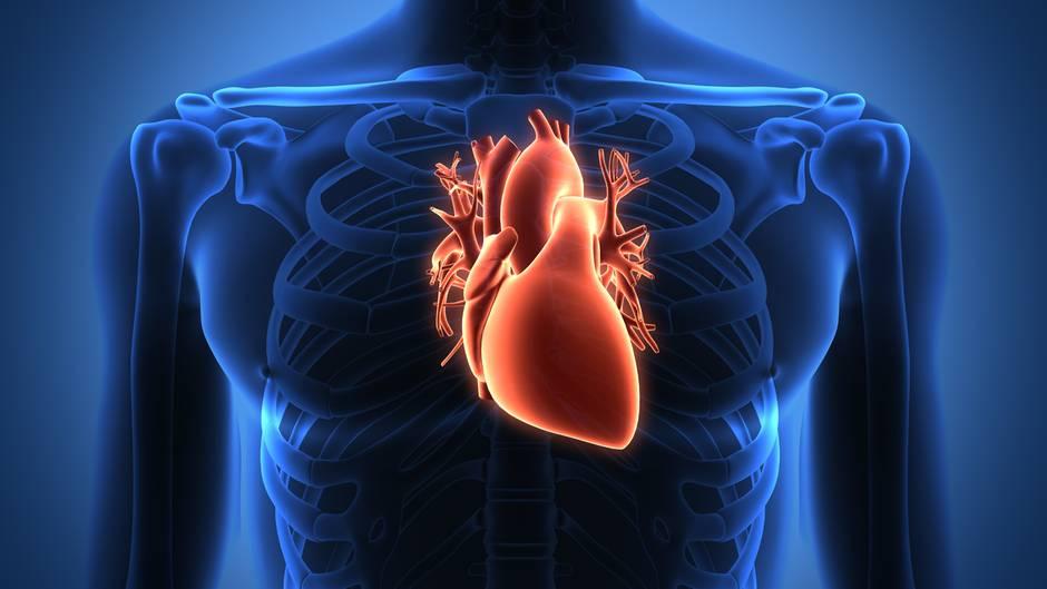 Das Herz - Alle wichtigen Infos zu Herzerkrankungen | STERN.de