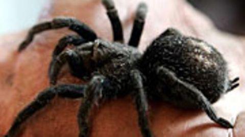 Kleine Mädchen lernen die Angst vor Spinnen schneller als Jungs