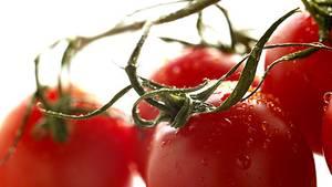 Reife Tomaten: Mehr Favonoide in der Bio-Ware