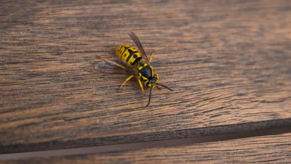 Schlagen Sie nicht um sich und vermeiden Sie schnelle Bewegungen, wenn Sie von Insekten belästigt werden. Die Tiere fühlen sich davon bedroht und stechen eher zu