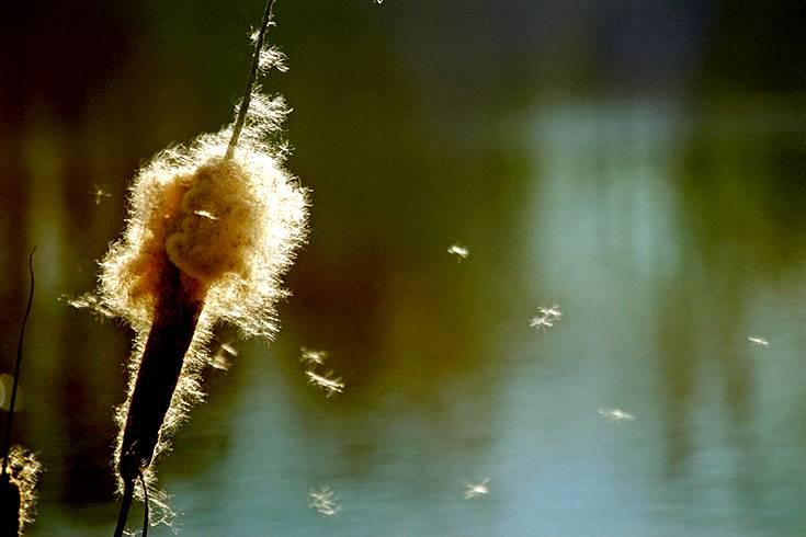 Achten Sie im Radio und Fernsehen auf die Pollenflugvorhersagen für Ihre Region oder nutzen Sie die tagesaktuelle Pollenflugvorhersage von stern.de