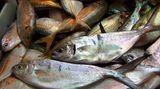 Gönnen Sie sich einmal in der Woche einen fetten Meeresfisch. Er enthält viele Omega-3-Fettsäuren. Unser Organismus braucht sie, kann sie aber selbst nicht herstellen. Sie haben viele gesundheitsfördernde Wirkungen.